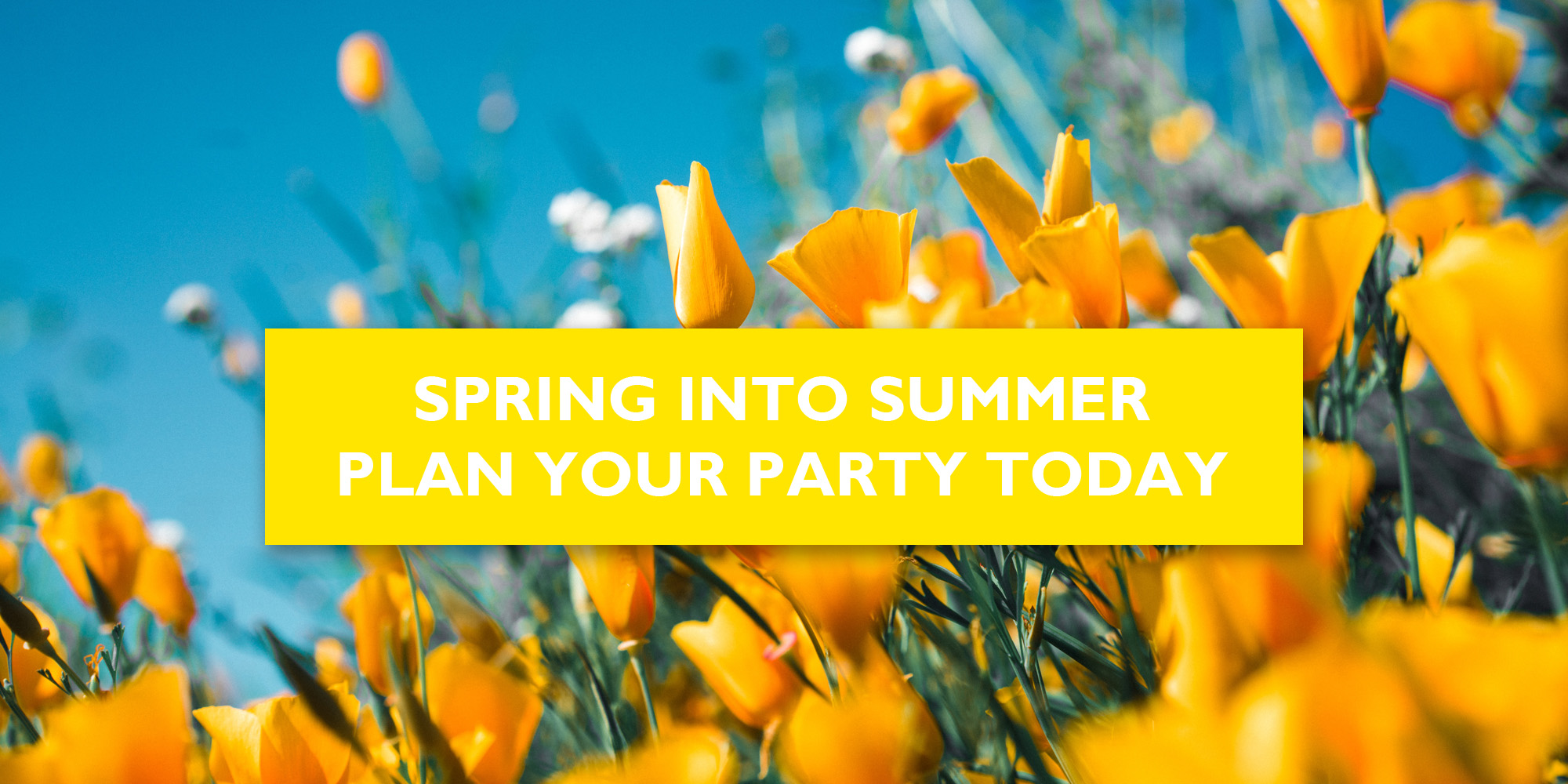 Spring in to Summer Party Decor